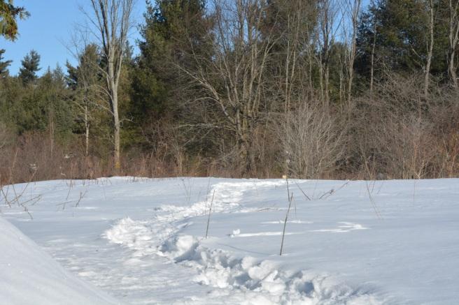Blog_March 26 2018 Snowy walk
